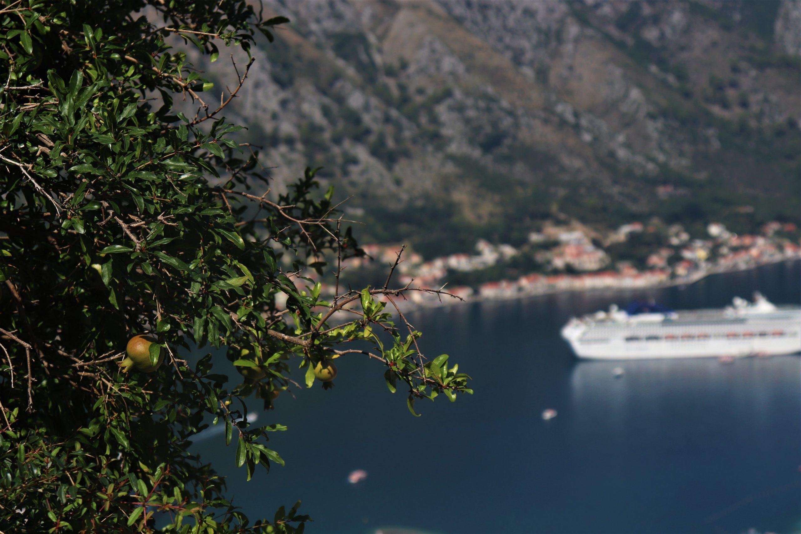 Pomgrenate of Montenegro